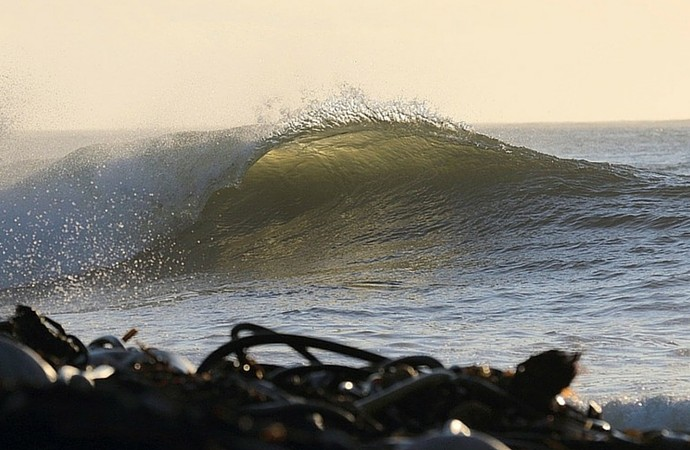 Kelp Ocean